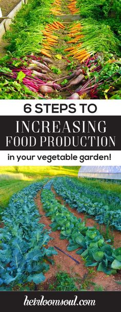 How to Increase Food Production in Your Vegetable Garden in 6 Steps | Heirloom Soul | heirloomsoul.com