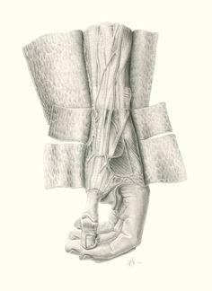 Disección de mano izquierda holandesa - Lisa Sánchez Aguilar