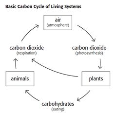 The carbon cycle best and most simple explanation c2 wk 4 basic carbon cycle ccuart Choice Image