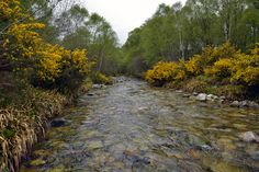 DESPITE STRAIGHT LINES posted a photo:  Photograph taken at an altitude of Fifty one metres at 13:34pm on Saturday 23rd May 2015 off the A896 heading towards Kinlochewe, standing in the icy cold water of A' Ghairbhe River.  Kinlochewe is a village in Wester Ross in the Northwest Highlands of Scotland. It is in the parish of Gairloch, the community of Torridon and Kinlochewe and the Highland Council area.  .  .  Nikon D800 24mm 1/160s f/6.3 iso100 Hand held. RAW (14-bit) AF-S single point…