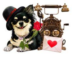 herzen erobern Rottweiler, German, Teddy Bear, Animation, Puppies, My Favorite Things, Animals, Photography, Happy Thursday