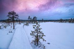 Winter in a bog, Estonia