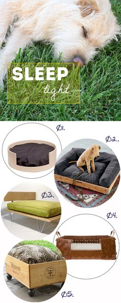 product, contained dog beds