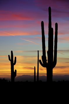 A Sonoran desert sunset in the southwest deserts of Arizona. Landscape Photography, Nature Photography, Photography Tips, Portrait Photography, Cactus Photography, Wedding Photography, Photography Equipment, Desert Sunset, Sunset Art