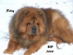 Riley as a senior..he sure loved the snow.