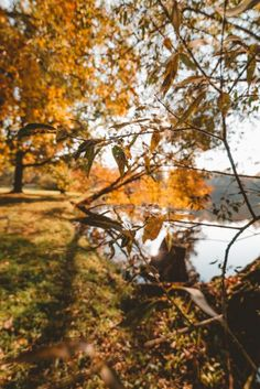 Autumn colors in Świerklaniec Park, Poland Beautiful Park, Beautiful Places, Autumn Photos, Just Like Heaven, Genius Loci, Autumn Walks, Bright Pictures, Cities In Europe, Above The Clouds