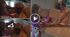 Menina Faz Exame Médico Ao Cão Mais Paciente Do Mundo http://www.funco.biz/menina-faz-exame-medico-ao-cao-mais-paciente-do-mundo/