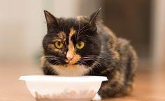 7 choses à savoir sur la lecture des étiquettes de nourriture pour animaux  Navigation dans les aliments pour animaux allée peut être difficile: les chiffres et les pourcentages d'une étiquette de nourriture pour animaux peuvent facilement être mal interprétés,