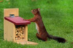 Animal, Squirrel, Sciurus, Foraging, Feed Box, Peanuts