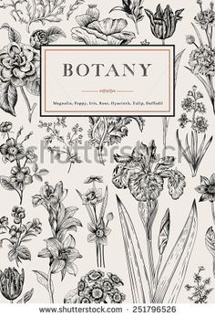 Illustration of Botany. Vector illustration of style engravings. Black and white flowers. vector art, clipart and stock vectors. Botany Illustration, Gravure Illustration, Illustration Botanique, Floral Illustrations, Vintage Botanical Illustration, Engraving Illustration, Illustration Styles, Floral Vintage, Vintage Flowers