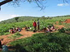 Bisil Kenya - Beadwork