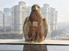 38 Epic Photos That Were Taken At The Perfect Moment Amazing Optical Illusions, Giant Squirrel, Perfectly Timed Photos, Epic Photos, Tier Fotos, Time Photo, Coincidences, Funny Animal Pictures, Bored Panda
