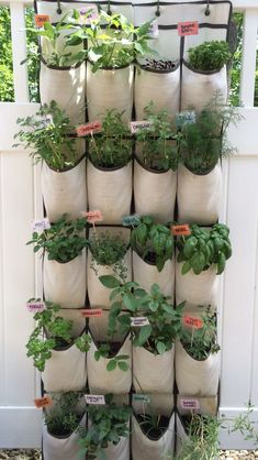 Hanging Herb Garden with Homemade Tags.   TAGS-wrote names of herbs on decorative scrapbook paper then used clear packing tape sealed on both sides to