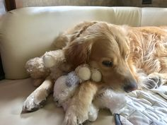 Just snugglin' with my toys! Super Cute Animals, Cute Funny Animals, Cute Puppies, Dogs And Puppies, Pet Dogs, Dog Cat, Dog Best Friend, Dog Nose, Raining Cats And Dogs