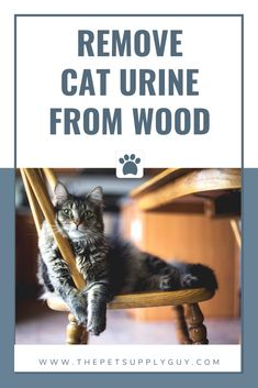 How To Remove Cat Urine from Wood Furniture (Cat Care Guide) Cleaning Cat Urine, Remove Cat Urine Smell, Cat Urine Smells, Dumb Cats, Cat Love Quotes, Cat Urine Remover, Cat Toilet Training, Cat Pee, Wood Furniture