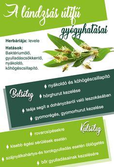 oleander fogyás)