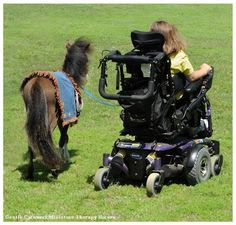 from Gentle Carousel Miniature horses