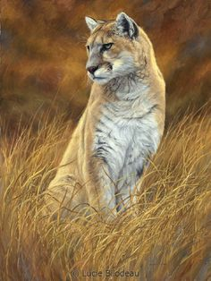 """Mountain Lion"", oil on canvas, 32"" x 24"", by Lucie Bilodeau."