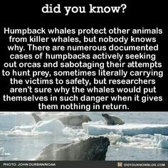 Maybe because only humans want something in return and animals are just kind and protective! That is tipically fot humans...If I do something nice for you, I want something in return. That is just wrong... And that is the reason why all animals go to heaven and humans don't!!