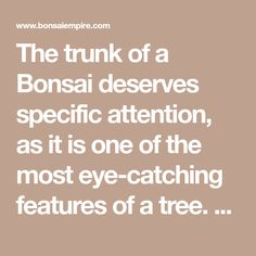 The trunk of a Bonsai deserves specific attention, as it is one of the most eye-catching features of a tree. The following features will be discussed: The Nebari, tapering, thickness and overall