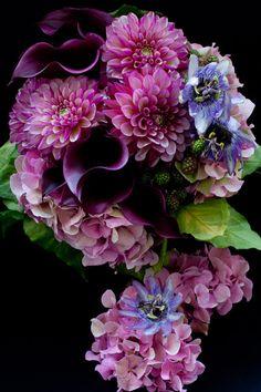 "from ""jardin du I'llony"" owner's blog"