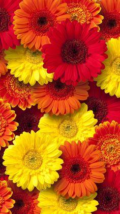 Beautiful Rose Flowers, Wonderful Flowers, Good Morning Flowers, Beautiful Flower Arrangements, Flowers Nature, Flowery Wallpaper, Flower Phone Wallpaper, Window Box Flowers, Rainbow Roses
