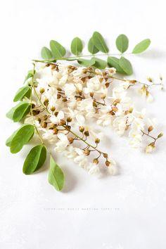 I fiori di acacia fritti non sono buoni, di più! Sono meglio delle patatine e certamente meno calorici! Toglietevi lo sfizio di provarli!