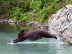 Alaska Fishing And Bear Watching Tours Entrée Destinations - Happy Animals Happy Animals, Animals And Pets, Funny Animals, Cute Animals, Bear Pictures, Animal Pictures, Animals Photos, Beautiful Creatures, Animals Beautiful