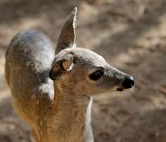 Southwest Wildlife Conservation Center : Donate : Legacy, Estate Planning or Other Assets