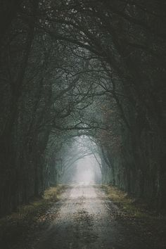 The darkest country road, and a strong scent of evergreen from the passenger seat...