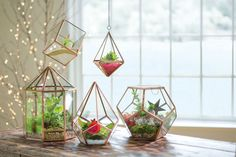 ... Hanging Prism Terrarium · *Shown with other terrariums, sold separately.