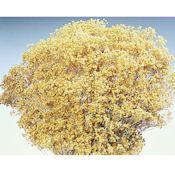 +Dried+Blooms+Broom+Flowers+-+Brooms+Bloom+for+sale