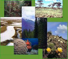 Ecosistemas de México - Ocio