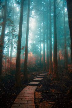 Nature Photography - The Path In My Dream ~ By Hanson Mao