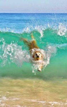 puppies at the beach & puppies on beach . puppies at the beach . cute puppies at the beach . cute puppies golden retriever the beach . cute puppies on beach Animals And Pets, Baby Animals, Funny Animals, Cute Animals, Cute Puppies, Cute Dogs, Dogs And Puppies, Doggies, Puppies Stuff