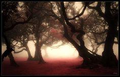 Misty Forest I (Fantasy Version) by Nichofsky.deviantart.com