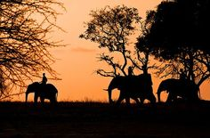 Riding an elephant while on safari in South Africa