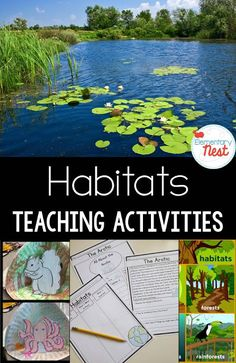 Habitat Activities and Lesson Ideas with a FREEBIE- hands-on crafts for kids and reading comprehension for a 1st and 2nd grade habitat science unit study..