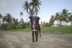 Abandoned Dog Photography - These Sad Photos Capture Stray Dogs In Puerto Rico's 'Dead Dog Beach' (GALLERY)