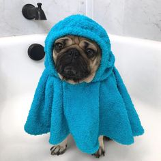 Pinned To #pug A Pug With Love DOES ANYONE KNOW WHERE TO BUY THESES PUG BATH ROBES? PUG HOODED BATH TOWELS?