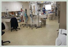Durable Epoxy Flooring Solutions for Commercial, Industrial, Medical, Public, & Institutional Buildings & Outdoor Spaces Commercial Flooring, Commercial Kitchen, Flooring Near Me, Hospitals, Kitchen Flooring, Epoxy, Clinic, Floors, Home Tiles