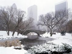 setting: Central Park Winter