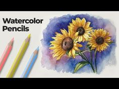 Learn how to use watercolor pencils to create a watercolor painting/drawing. See how watercolor pencils differ from traditional colored pencils. Watercolor Pencils Techniques, Watercolor Pencil Art, Watercolor Sunflower, Pencil Painting, Easy Watercolor, Drawing Techniques, Painting & Drawing, Watercolor Paintings, Watercolor Lesson
