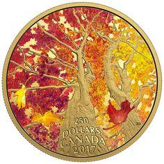 250 Dollar Gold Ahorn Baumkronendach - Kaleidoskop der Farben PP