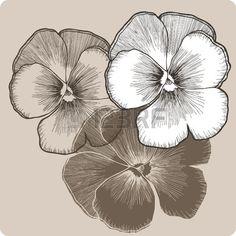 Flor del pensamiento dibujo a mano Ilustraci n del vector  Foto de archivo …