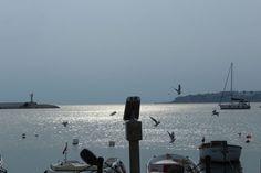 Binoculars - silivri, Istanbul