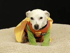 Chase is available for adoption at the Davidson County Animal Shelter in Lexington, NC