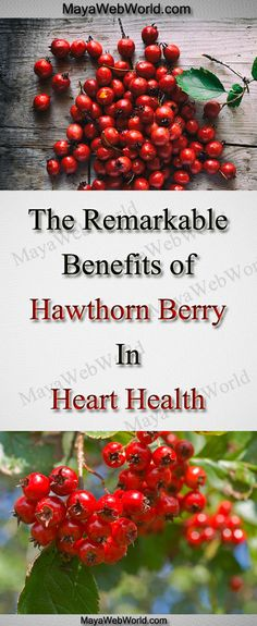The Remarkable Benefits of Hawthorn Berry in Heart Health