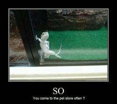 so do you come to the pet store often? This made me LOL Memes Humor, Funny Memes, Jokes, Funny Tweets, Pet Humor, Pet Memes, I Smile, Make Me Smile, Funny Cute