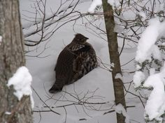Park ON Canada Bird Watching, Places To Visit, Birds, Park, Highlands, Nature, Wolf, Canada, Outdoor